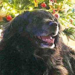 pet-treated-by-healing-tree-health